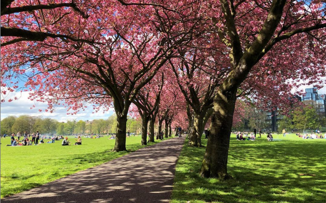 Best spots to enjoy the spectacular Cherry Blossom show in Edinburgh